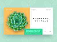 Plants - Website design