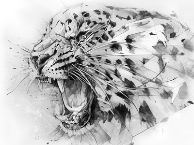 Derwent Leopard derwent pencil drawing illustration