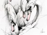 Swans Drb