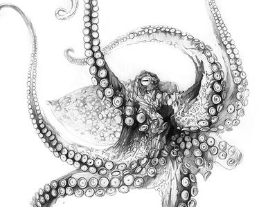 Octopus drawing sketch lines pencil derwent octopus