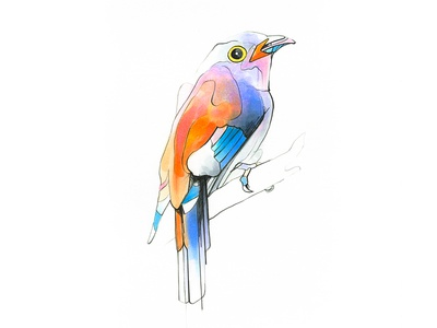 Aves drawing pencil color markers art copicmarkers bird