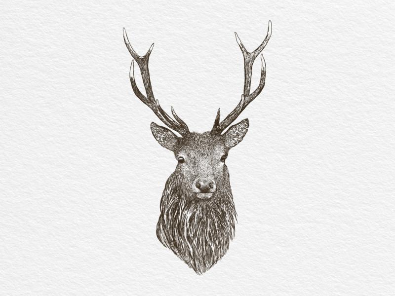 Deer illustration fresco print deer hand drawn vector vintage illustration