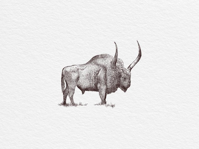 Bison fresco bison vector print hand drawn vintage illustration