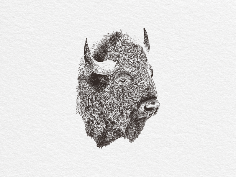 Buffalo vector illustration bison buffalo print vintage hand drawn illustration
