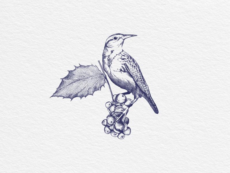 Western Meadowlark Bird meadowlark western bird oregon print logo hand drawn vintage illustration