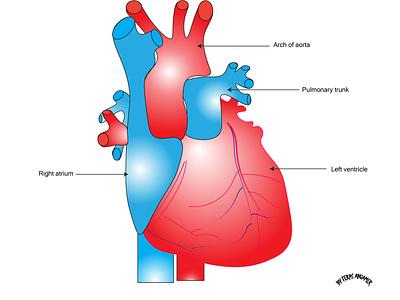 An illustration of a human heart health illustration nursing medical graphic design