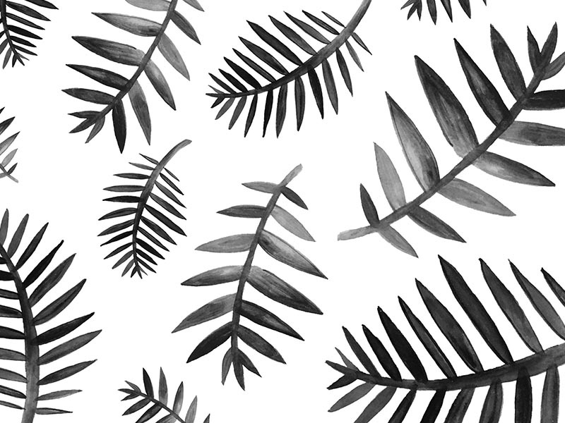 no.009 illustration plants plant nature pattern watercolor ink white black palms palm