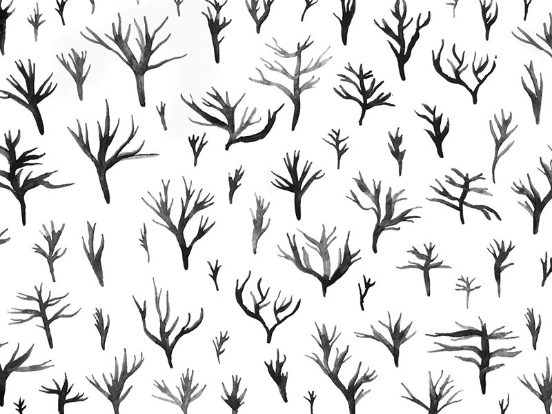 no.016 neutrals white black monochromatic pattern ink nature branch stick tree plant coral