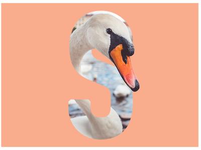 S is for Swan type art monogram typogaphy picture sketch art wildlife letter swan photoshop design