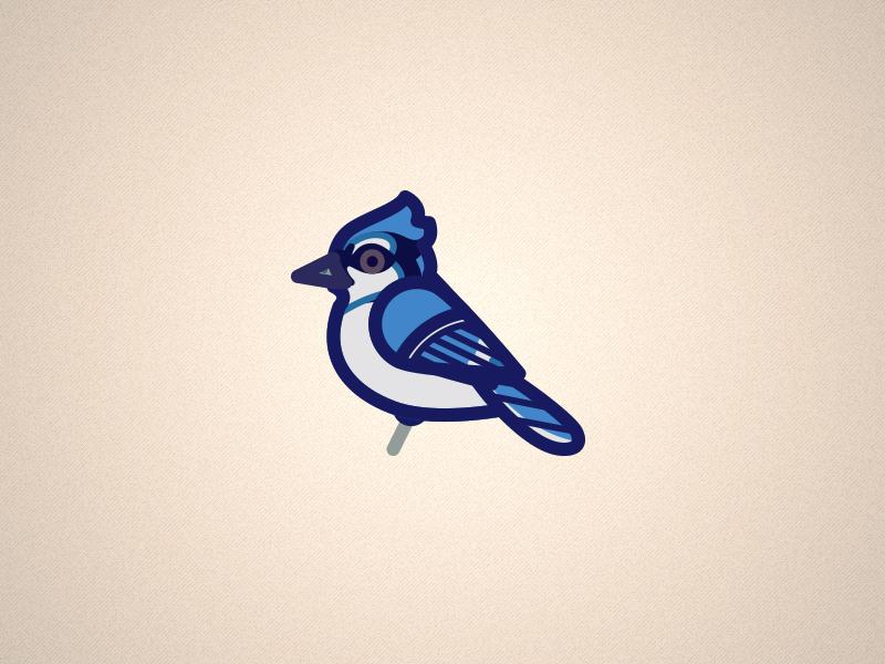Bluejay minimal bird bluejay illustrator