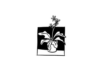 Plant study illustration sketch ilustracion doodle cuu study icon outline mexico design art illustration
