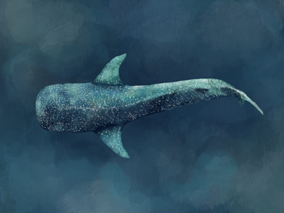 Another whale shark, a different style ocean procreate art procreateapp procreate illustraion whale shark