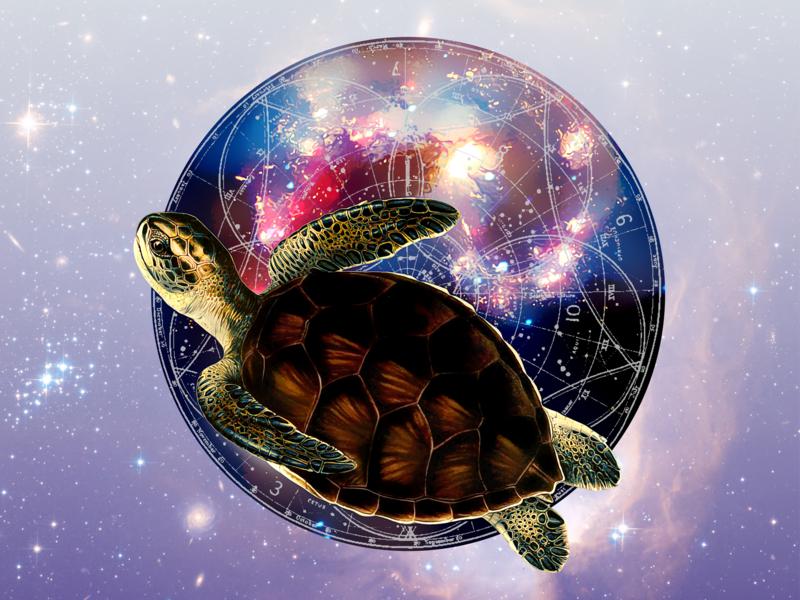 Flying Turtle illustration design