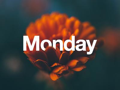 Monday helveticaneue cove monday