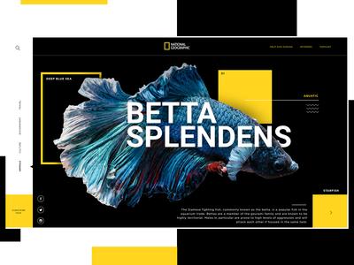 National Geographic Website Design Concept