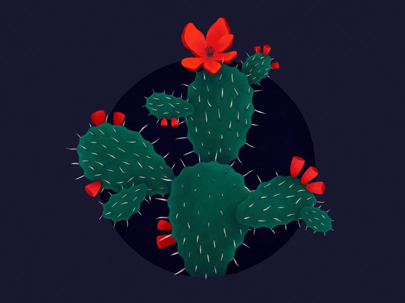 Prickly Pear Cactus plant illustration cactus illustration illustrator procreate