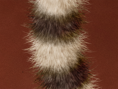 Raring Ringtail ubuntu brown red tail ringtail fur animal