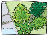 Leafy Plants Sketch
