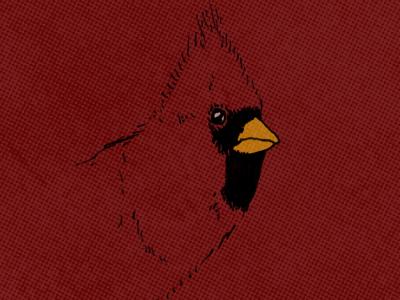Cardinal illustration baseball bird cardinal