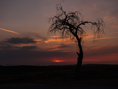 Pioneertown Tree At Dusk creative commons cmyk photocrops image photo desert dusk tree