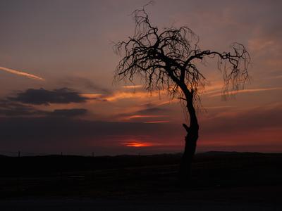 Pioneertown Tree At Dusk