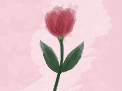 Watercolor tulip onn the light rose background custom brush tulip flower watercolor flower watercolor art watercolor brush brush watercolor illustration design poster