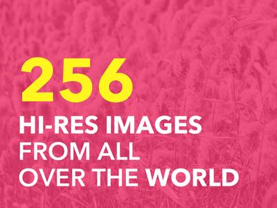 256 Hi-Res Stock Image Pack + BONUS
