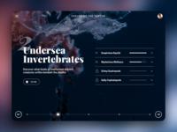 Undersea Invertebrates