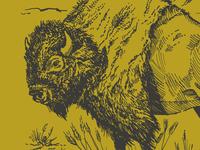 Bison Illustration