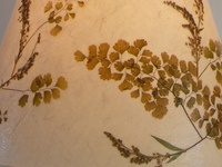 Detailed shot of The Marriage of Coriander, Ginkoba & Wheat