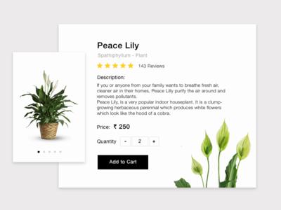 Daily UI #012 Single Product plants e-commerce single product plant peace lily challenge ui daily daily ui