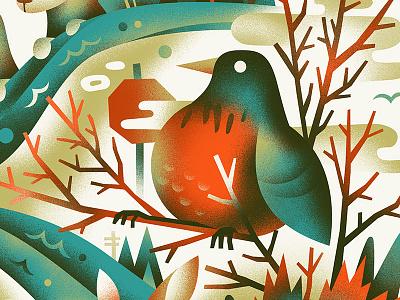 Robin in the hood birds robin bird
