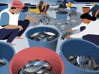 Fishing community -  Styleframe