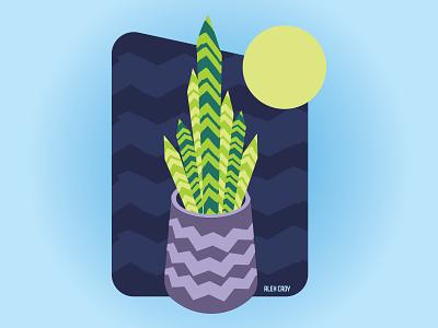 Snake Plant vector illustration design graphic design houseplants plants art