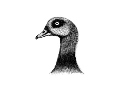 Egyptian Goose Stippling Procreate BRD 2-1-19
