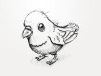 Pigeon Sketch