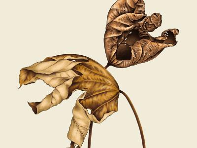 Fall Leaves botanical art botanical procreate illustration autumn