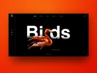 Birds Header