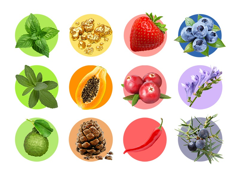 SPLAT icons gold bergamot papaya strawberry mint fruits icons splat looi