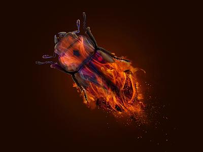 Bugfire burned burn insect bug fire animal