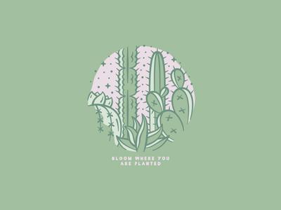 Bloom graphic design lock up icon tones colour adobe illustrator adobe illustrator illustration succulent cactus cacti