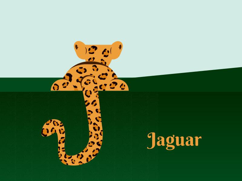 J letter j illustration letter graphicdesign