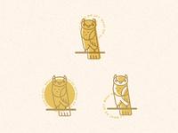 UCDD Friendly Owls