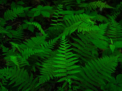 Green Ferns iphone case poster underbrush forest leaves photograph nature plants fern ferns green