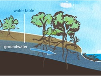 Groundwater Flow in Riparian Zone