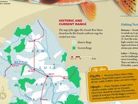 Fish Brochure - Detail