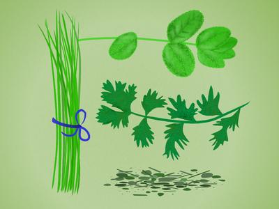 Food illustration  herbs