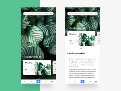 Photographing, plant identification search typesetting green monstera discriminate skill card similarity identification photo plant ux app ui design