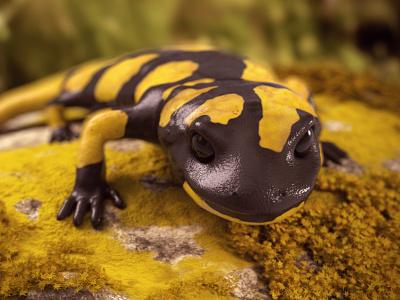 Fire Salamander zbrush c4d cg 3d vray cinema 4d dof animal salamander nature render