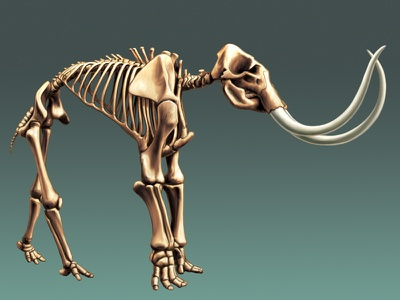 Mammoth tusks mammoth exhibit museum skeleton bones prehistory prehistoric illustration